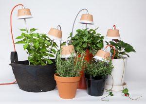 Coltivare-un-orto-in-casa-bulbo